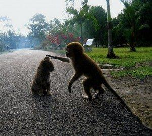 Gatto e Scimmia - www.scuoladirespiro.org
