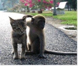 Gatto e Scimmia 2 - www.scuoladirespiro.org