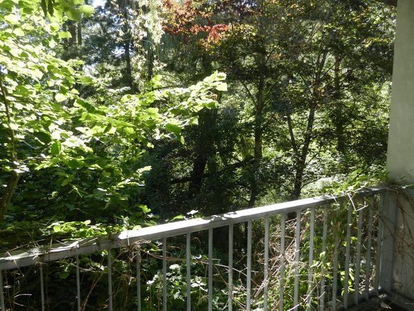 La foresta 5