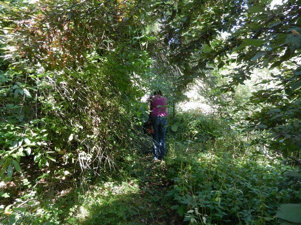 Andreana nella foresta